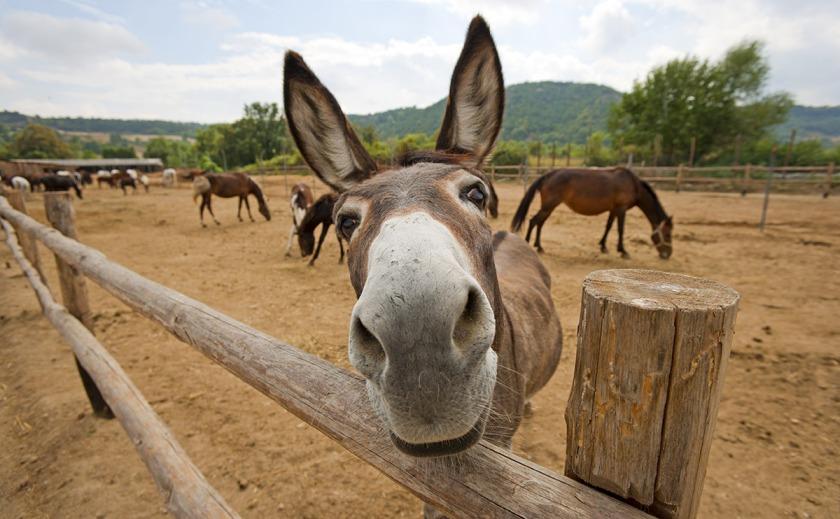 donkey-hero